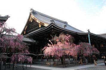 本山佛光寺。境内の「和合所」と呼ばれる棟がショップに、「茶所」だった場所がカフェとなった。内装を手がけたのは京都造形芸術大学の教授でおあるgrafの服部氏