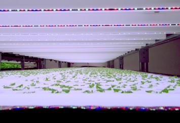 苗を育てる育苗室