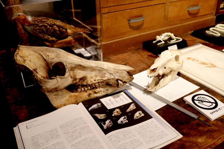企画展「学術情報課程―その教材と研究資料―」の展示。昔の標本室を再現している
