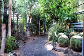 サボテンや熱帯植物が茂るバイオリウム内部