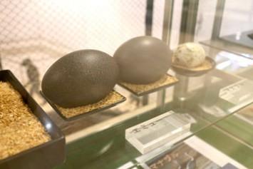エミューの卵の外殻。経年のため黒く変色してるが、実際は深い緑色だそう