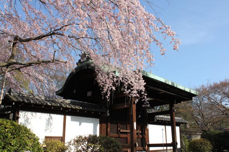 桜の時期も見事です
