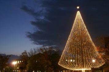 同志社大学京田辺キャンパスのイルミネーション。高さ15メートルのモミノキが神秘的に輝く。開催期間:2015年11月30日(月)~12月25日(金)