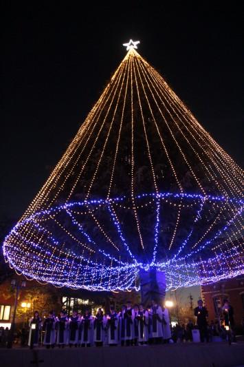 同志社大学今出川キャンパスのイルミネーション。高さ23メートルの巨大なヒマラヤスギがイルミネートされる。開催期間:2015年11月20日(金)~12月25日(金)