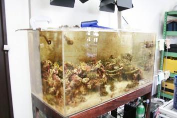 研究所内で珊瑚の飼育も。潮流で発電できる機械を使い、珊瑚の成長を促進するそう