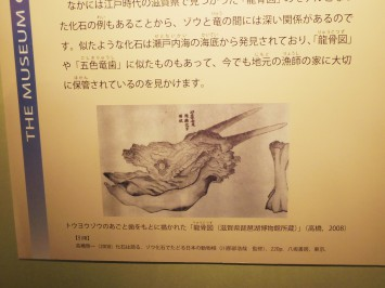 竜骨のスケッチ。