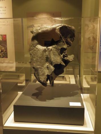 ゾウの骨の一部
