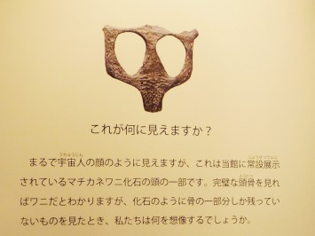 マチカネワニの頭骨の一部