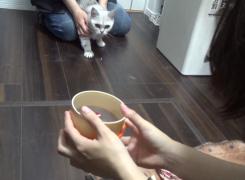 実験に協力中のネコ。じっと見ていますね