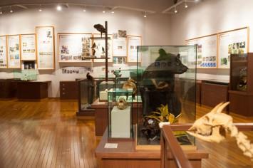 知への冒険心が高まる展示室