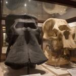 ナウマンゾウとアジアゾウのアゴの骨の化石。「ナウマンゾウ」の命名者は京大の槇山次郎博士だ
