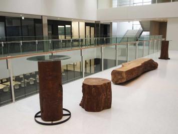 新教室棟建設にあたり、伐採された樹木が再利用されている