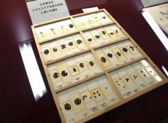 三木先生が実際に採集し調べた化石