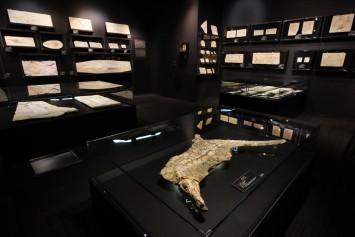 貴重な古代ワニ「イタスクス」、現代のワニと違いを探してみるのもおもしろい。