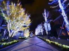 徳島キャンパスイルミネーシ