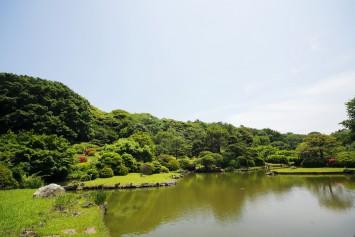 小石川植物園_036