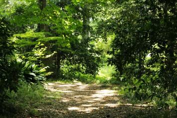東京の真ん中?まるで山の中へとテレポートしたような豊かな自然林が残る
