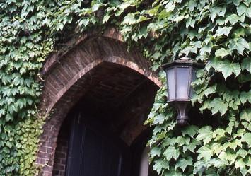 建物を覆うツタは2種類の常緑ツタと秋〜冬に葉を落とすナツヅタ。「受験生は本館のツタに触れると合格する。新入生はツタが枯れるまでに恋人ができないと4年間ずっとできないまま」という言い伝えもあるとか