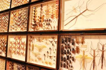 右上にあるのは、なんと世界最長の昆虫(ナナフシの一種)!