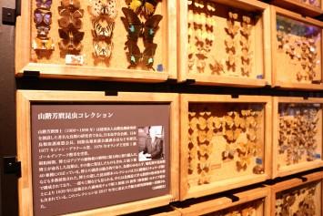 山階芳麿コレクション。蝶や蛾が多く展示されていた