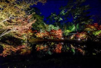 見学者からは「京都行かんでもいいなぁ」の声がちらほら