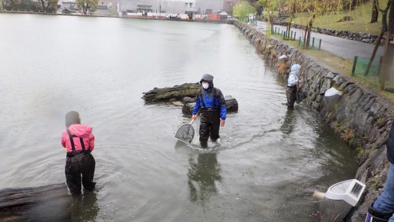 調査は雨の中行われた。エサでおびき寄せる「モンドリ」とタモを使って魚を採取する