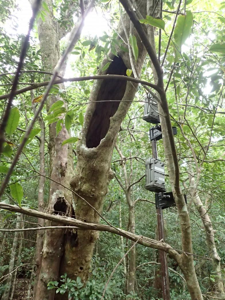 樹洞に設置した調査用のカメラ