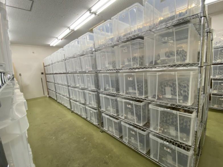 """フタホシコオロギを飼育している""""グリラスファーム""""。プラケースがぎっしり並ぶ。現状、餌やりや水替えは手作業で行っている。"""