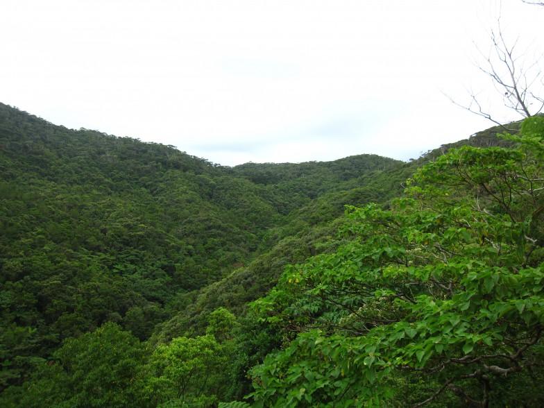 ケナガネズミが暮らす沖縄島北部の森林