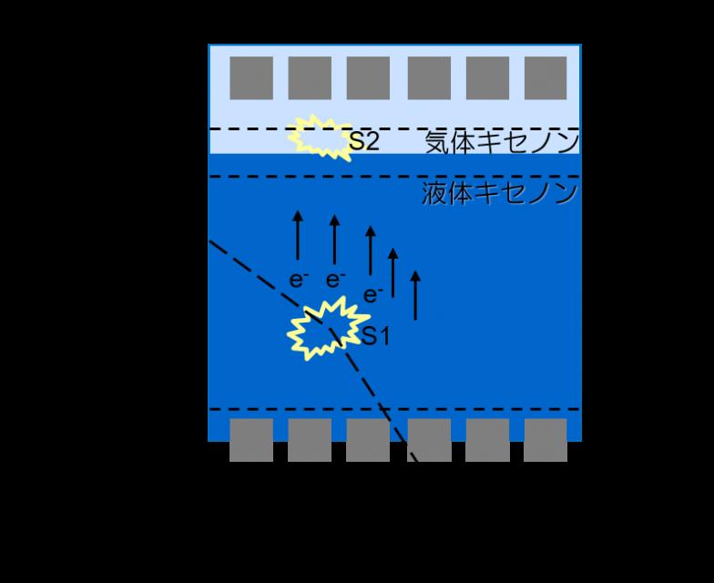 液体キセノン検出器の検出原理。ダークマターがキセノンの原子核を跳ね飛ばしたときに発生する微弱な光を、光電子増倍管でキャッチする