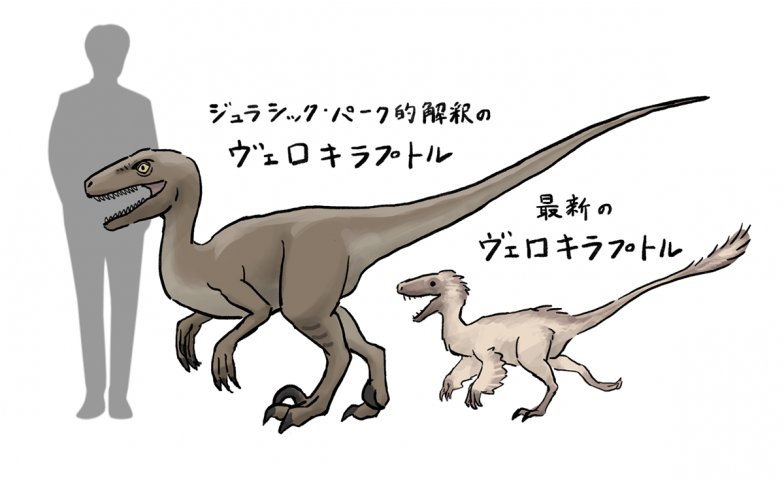 シリーズを通して活躍する人気恐竜ヴェロキラプトルは、実際はもっと小型で全身が羽毛に覆われていたと考えられている