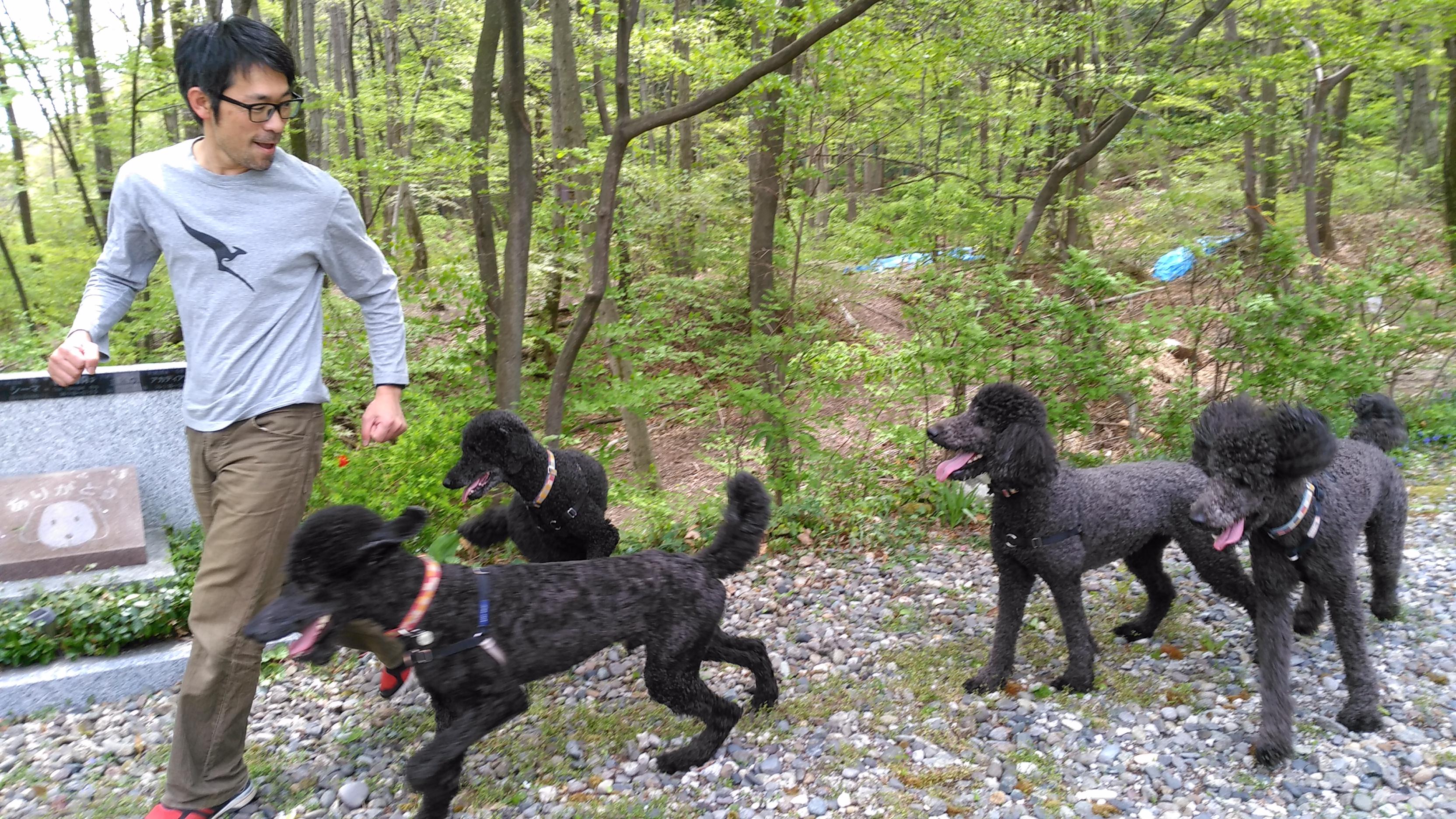 菊水先生と4頭の犬たちは公私ともに支え合うパートナーだ