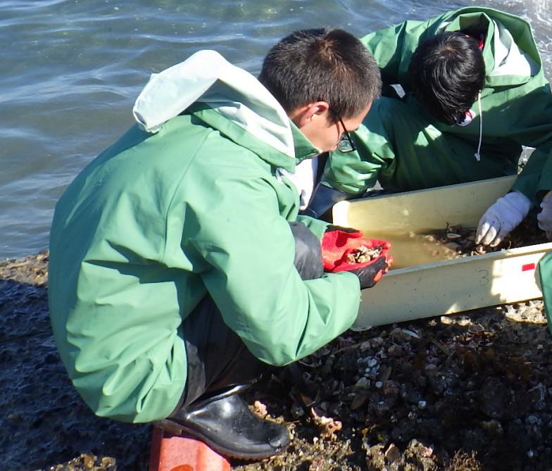 作業中の吉田さん。海底の砂泥を採集し、そのなかの生き物を探しているところ