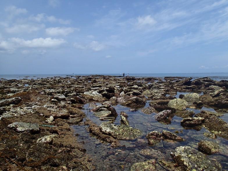 お話を伺った吉田さんが調査地とする、館山市沖ノ島の北西にひろがる磯環境。美しい青空