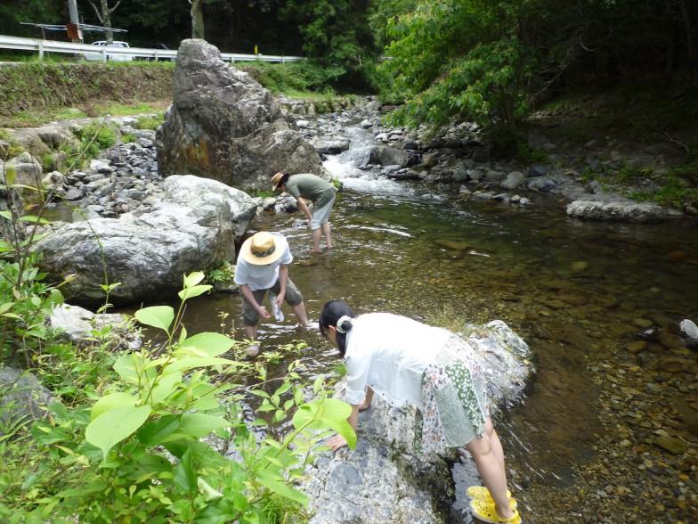 学生と一緒にホタルの幼虫を採取する