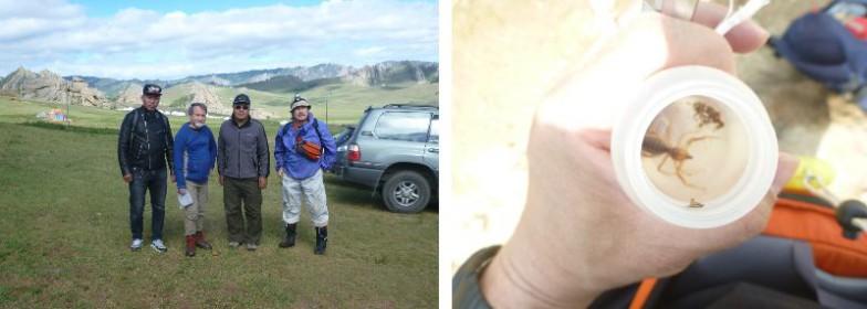 モンゴルのゴビ砂漠でヒヨケムシの調査も
