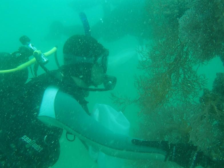 海でクモヒトデを採集する岡西先生。一度にある程度まとめて採集して、標本にしたものを長い時間をかけて分類してゆく(写真提供:藤田敏彦[国立科学博物館])