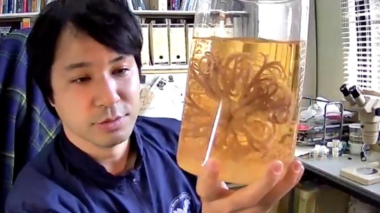 岡西先生が手に持っているのはクモヒトデの仲間、テヅルモヅルの標本