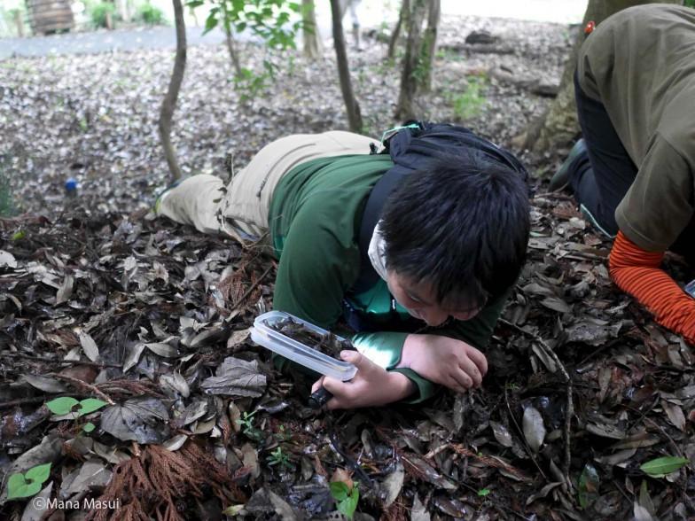 「最初はなかなか見つからなかったけれど、変形菌と目線を合わせながら探していくうちにコツがわかってくるんです」と、落葉から子実体を探す増井さん。