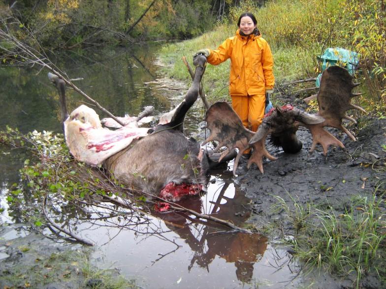 ヘラジカの解体。ヘラジカは現生する北方の偶蹄類でも最大級の動物であり、体高は3mほどにもなるという。