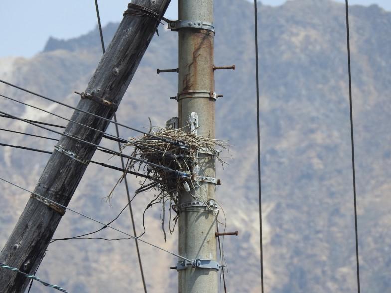 電柱に作られたカラスの巣
