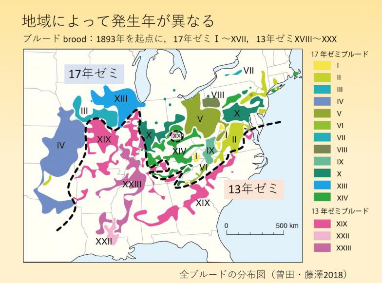 全ブルードの分布図。北部に17年ゼミ、南部に13年ゼミのブルードが分布している